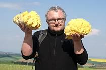 Redaktor Deníku Karel Rozehnal našel v okolí Stínavy na Prostějovsku na staré vrbě dvě obří plodnice sírovce žlutooranžového