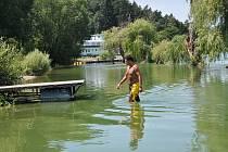 Někteří plavci se na přehradě sinic nebojí
