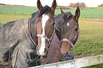 Nikas (vpravo) a Čáriray (vlevo) si užívají vítězství na hvozdeckých pastvinách.