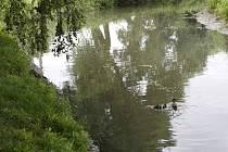 Blata po ekologické havárii znovu oživá