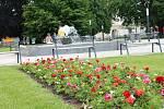 Centrum Prostějova hýří barevnými květinami. 6.6. 2019