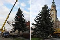 Prostějovské náměstí zdobí stříbrný smrk ze Seloutek. Vlevo na snímku nakládání stromu v Seloutkách, vpravo již smrk stojí na prostějovském náměstí