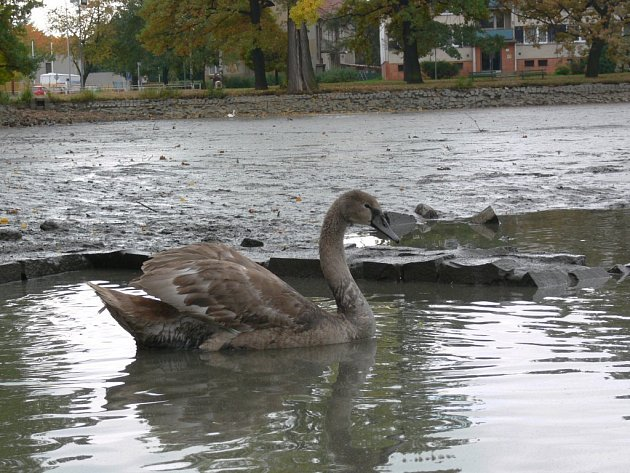 Vypuštěný drozdovický rybník