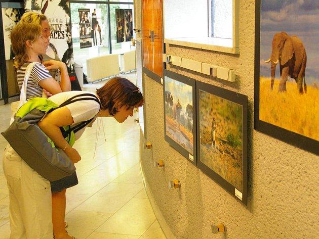 Záběry z exotického kontinentu nenechávají návštěvníci kina bez  povšimnutí.