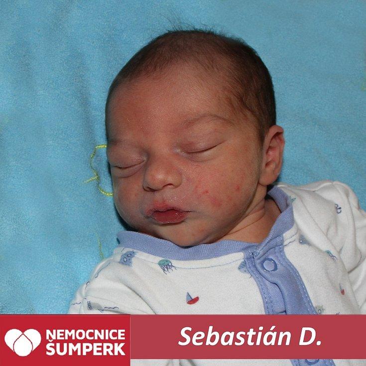 Sebastián D.Králíky