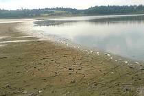Mrtvé ryby na plumlovské přehradě