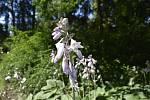V Botanické zahradě se skrývá spousta zajímavé zeleně. Bohyška. 28.7.2020