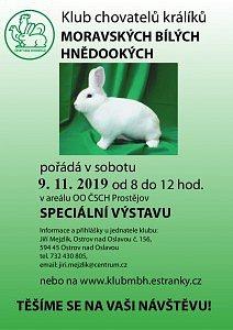 Výstava bílých hnědookých králíků