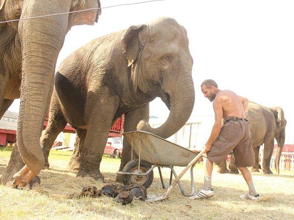 Cirkus Humberto vProstějově