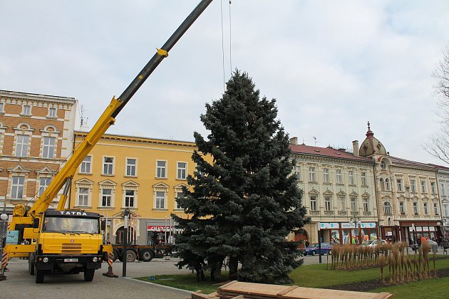 V pondělí po desáté hodině dorazil na náměstí TGM vánoční strom. Tentokrát centrum města zkrášlí smrk z Brodku u Konice.