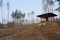 Těžba dřeva a zalesňování podél žluté turistické trasy z Pohodlí do Seče - konec března 2020