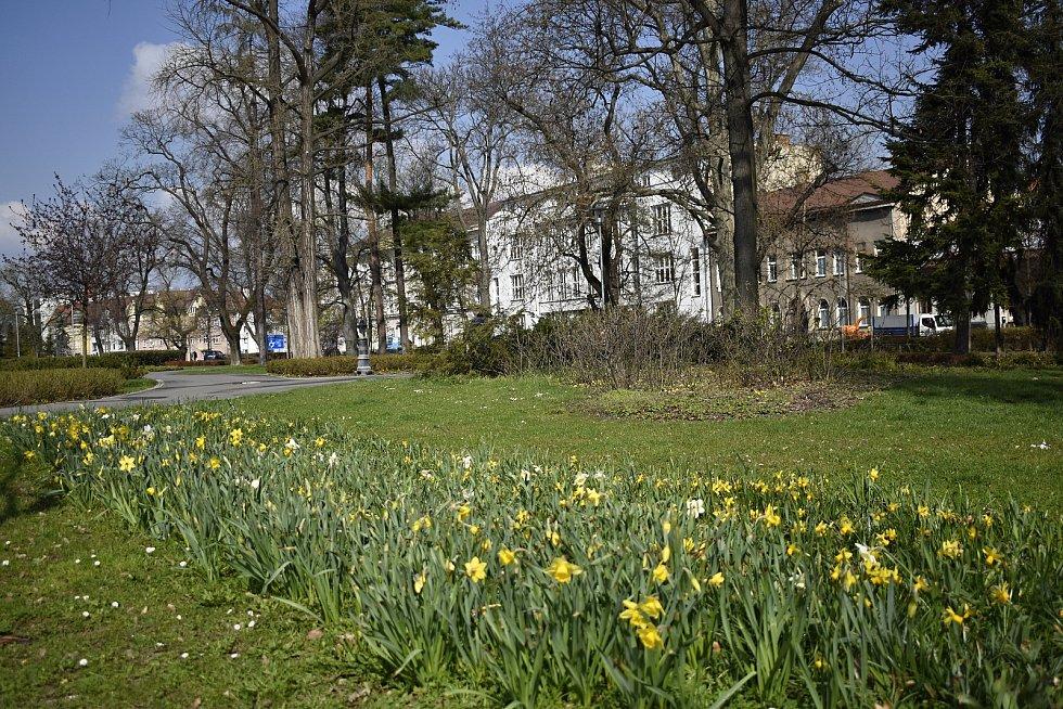 Rozkvétající Prostějov - 20. dubna 2021