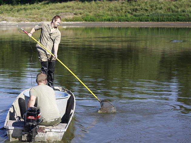 Odlov ryb v laguně u Valáška na revitalizované Plumlovské přehradě.