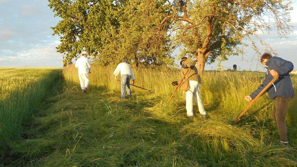 Sečení trávy v Pivíně 2020