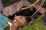Záchrana koně ve Vojtěchově
