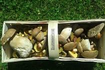 Za hodinu Štěpánka s přítelem nasbírala u Laškova plný košík hub