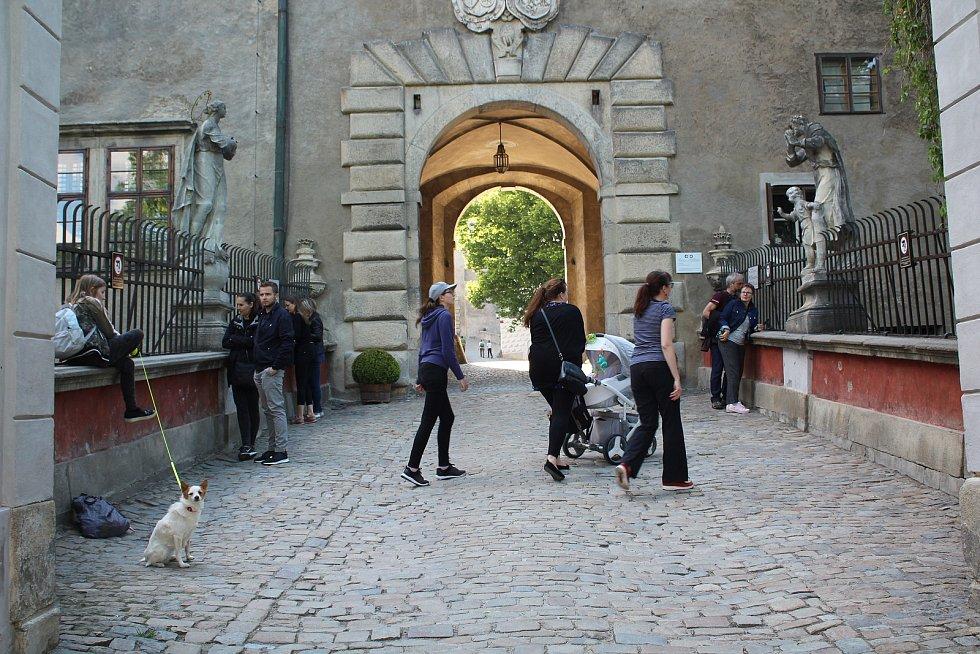 """Drobná, dnes dvouletá brtnice Polyxena a mnohem větší tříletý """"Rumun"""" Vilém žijí od července 2019 v hradním příkopu na krumlovském zámku."""