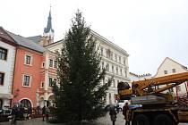 Dvanáct a půl metru vysoký smrk měli lesníci pokácený, naložený, převezený a postavený na náměstí Svornosti za hodinu a čtvrt.