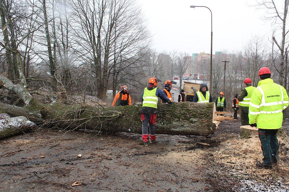Kácení stromů na výjezdu z Velešína.
