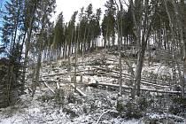 Polomy v Černém lese nad Želnavou.