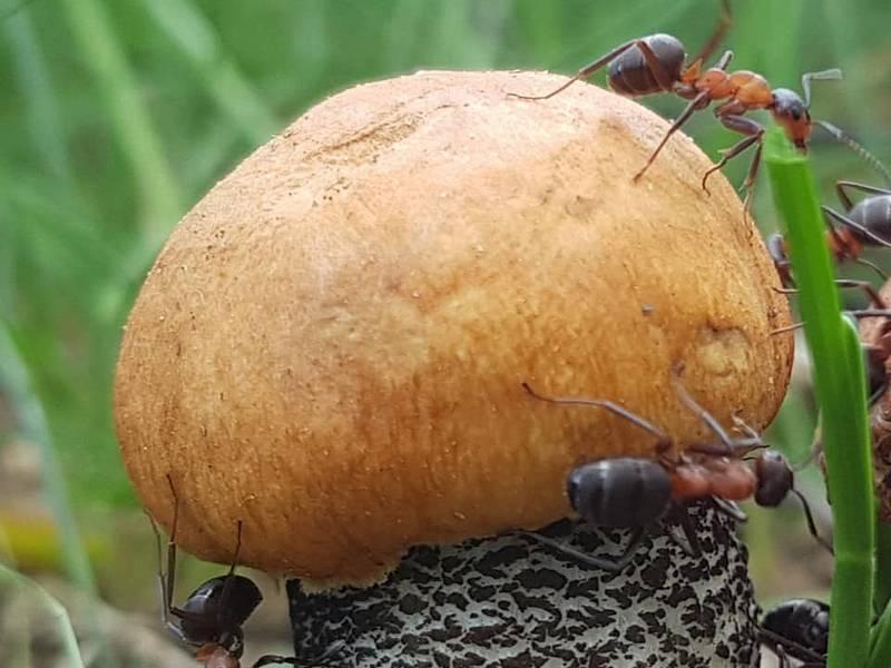 Houbaři se ve skupině Houby pochlubili svými prvními úlovky. Takhle rostou na Ústecku.