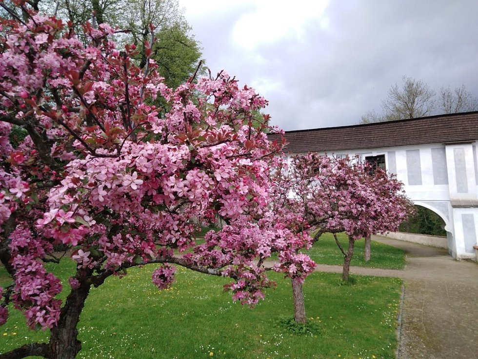 Areál zámku Český Krumlov je v plném květu.