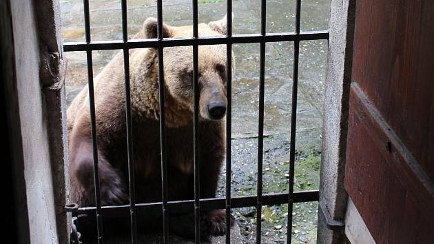 Českokrumlovské zámecké medvědárium prodělává úpravy.