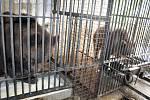 Českokrumlovské medvědárium ožilo novými mladými huňáči.