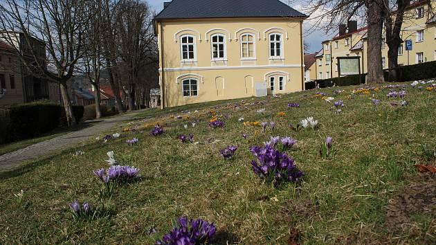 Barevná krása kolem bývalé staré radnice v parku na náměstí ve Vyšším Brodě.