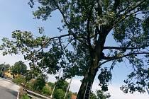 Velešínští hasiči v pondělí odpoledne raději odstranili i ulomenou větev nad vozovkou.