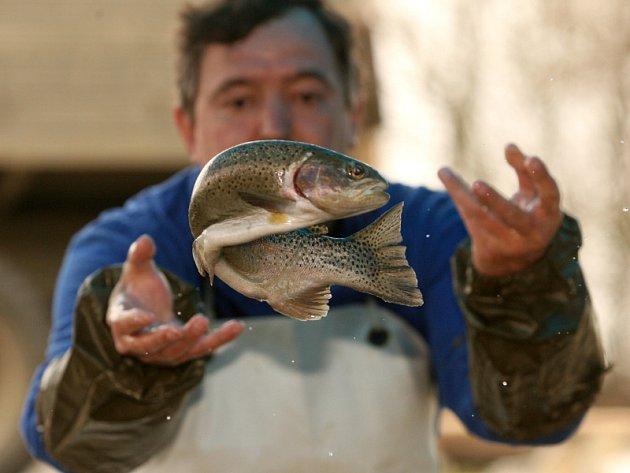 Za necelé dva týdny odstartuje pstruhová sezona, které se rybáři v celé republice nemohou dočkat.
