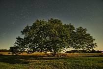 Strom Strážce Výštice v Olešníku se uchází o Strom roku
