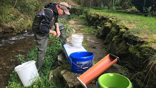 Přátelé vod pětilisté růže provádějí pravidelné kontrolní odlovy na potocích, které se vlévají do krumlovského rybářského revíru.