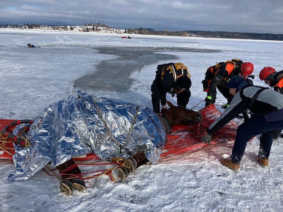 Kobylka Zoja se propadla do Lipna kilometr od břehu. Zachránili ji vodní záchranáři společně s hasiči a mnoha dobrovolníky, např. Karlem Andrlem (na snímku předu).