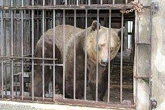 V pondělí nastala v medvědáriu veliká operace - instalace nových kmenů do medvědích výběhů.