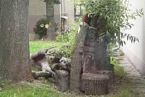 Broukoviště na zahradě Základní školy Fantova v Kaplici.