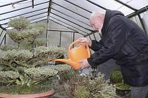 Antonín Švec už se těší na jaro, až mu zase začne práce kolem bonsají.