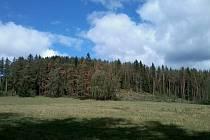 Borové porosty na Kájovsku poškodily červnové kroupy, jaké škody napáchaly, se přesně uvidí na jaře.