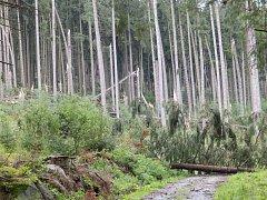 Takto to vypadá  v některých lesních lokalitách Vojenských lesů a statků.