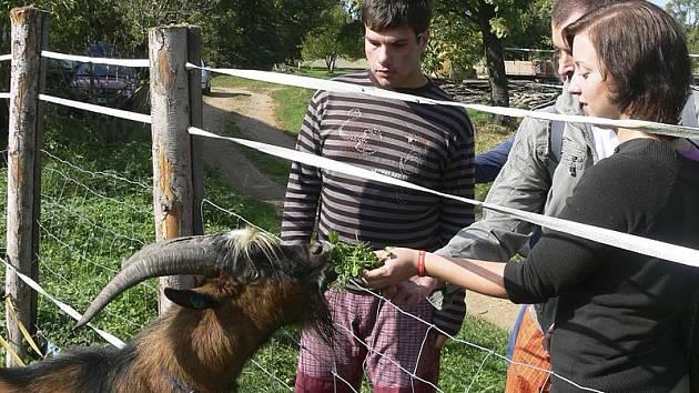 Na snímku lidé z trhovosvinenského Domečku, kteří organizaci navštívili v rámci Skřidelského bramboru.