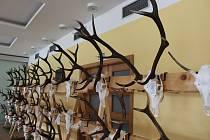 Jednou z akcí tohoto týdne je chovatelská výstava trofejí zvěře ulovené na Českokrumlovsku. Ta začíná ve čtvrtek. Ilustrační foto.