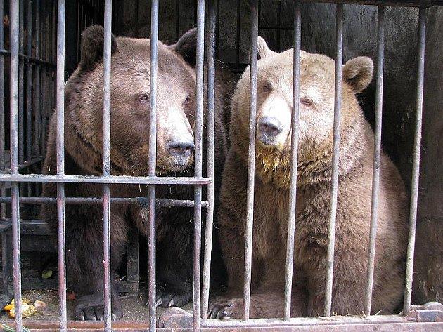 Medvědí pár býval zobrazen i na erbech Rožmberků. Jejich údajné příbuzenství s rodem Orsini mělo doložit starobylost rožmberského rodu a posouvalo jeho kořeny až do starověkého Říma.