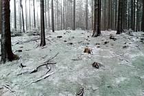Kleť se sněhovým popraškem.