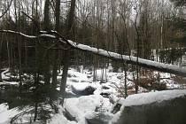 Zimní procházka kolem vltavských Čertových proudů u Loučovic.