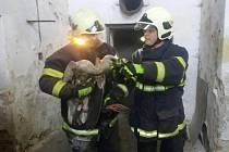 Čápa z komína vytáhli dobrovolní hasiči Černé v Pošumaví.