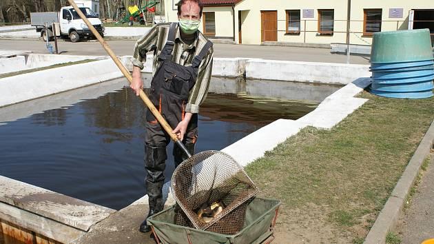 Ryby z výlovu si můžete koupit od pondělka na sádkách ve Chvalšinách.