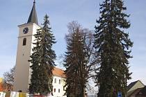 Velešínští se chystají porazit na náměstí čtyři smrky. Takzvaná Masarykova lípa tady zůstane.