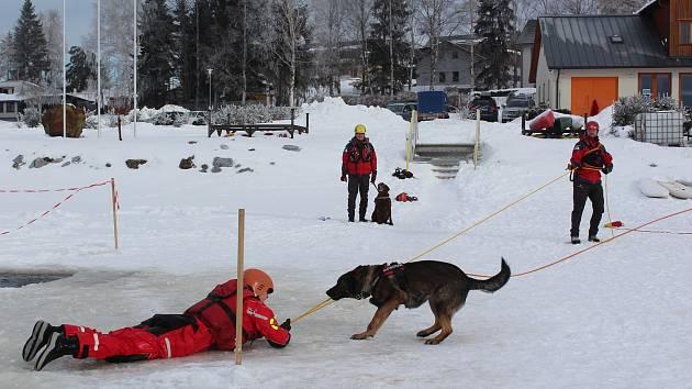 Pro psí záchranářky, fenka německého ovčáka Aiwy manželů Wimmerových a Hissimo, Chesapeake Bay retrieverka šéfa vodních záchranářů Milana Bukáčka, je práce zábava.
