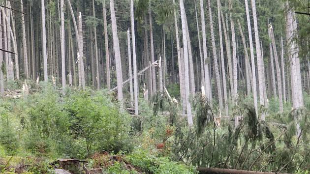 Les na Českokrumlovsku po silném větru.