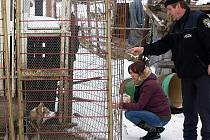Ač úterní počínání kynologů v Mostkách na první pohled záchranu psů nepřipomínalo, s vystrašenými zvířaty to zkrátka po dobrém nešlo.